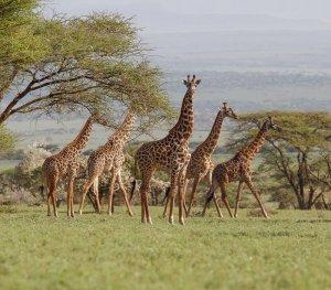 Ngorongoro Conservancy