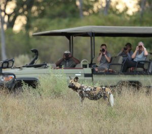 Wild dog on game drive